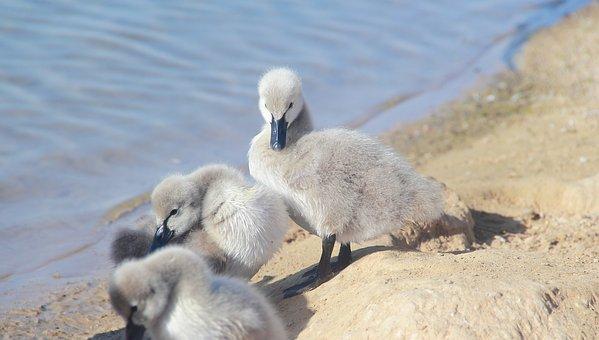 Nature, Water, Animal, Bird, Wildlife, Lake, Beautiful