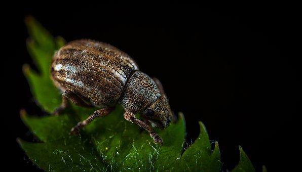 Bespozvonochnoe, Living Nature, Insect, Beetle, Nature