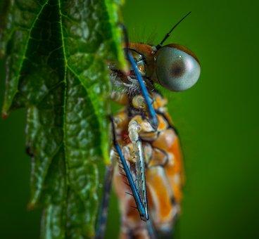 Insect, Nature, Animals, Bespozvonochnoe, Dragonfly
