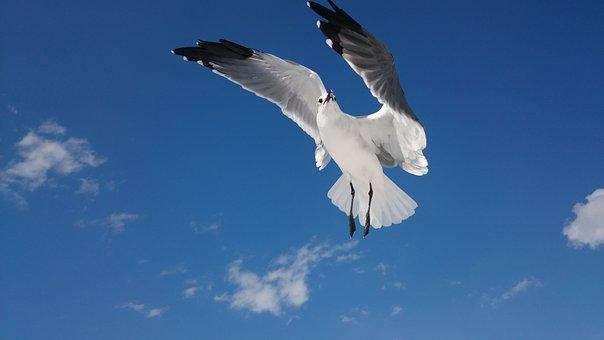 Sky, Flight, Nature, Blue Sky, Birds