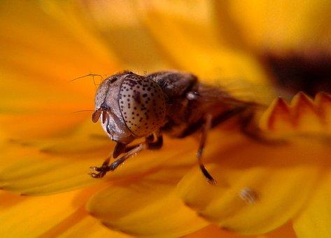 Insect, Nature, Flower, Closeup, Flora, Antenna