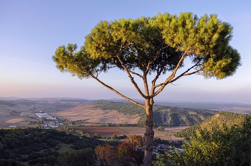 Tree, Landscape, Nature, Sky, Mountain, At The Court Of