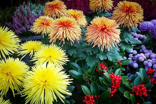 Flower, Garden, Nature, Plant, Leaf, Market Stall
