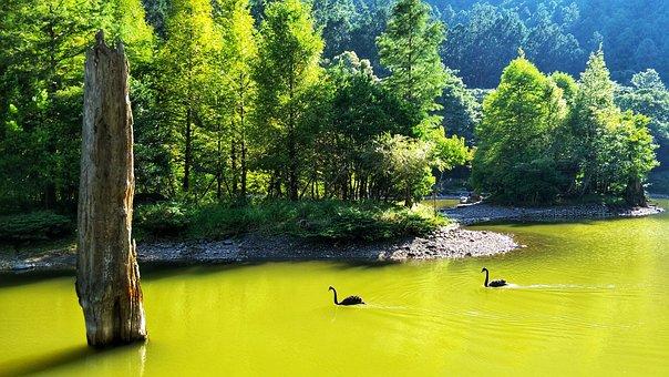 Waters, Nature, Summer, Wood, Tree, Lake, Landscape