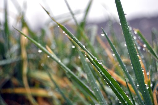 Dew, Plant, Cool, Pearl, Lawn, Outdoors, Environment
