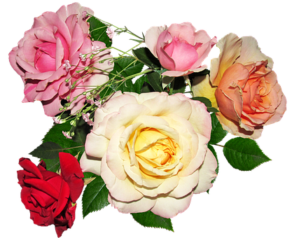 Rose, Flower, Petal, Bouquet, Love