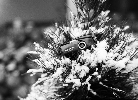 Christmas, Tree, Winter, Pine, Snow, Camera, Film, Lens