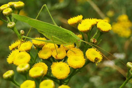Nature, Plant, Flower, Leaf, Floral, Garden, Animals