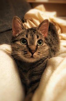 Cute, Portrait, Cat, Animal, Mammal