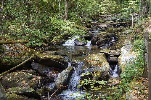Water, Stream, Nature, River, Wood, Moss, Waterfall