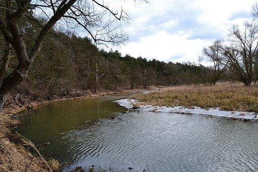 River, Forest, Nature, Landscape