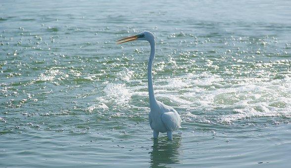 Water, Nature, Sea, Bird, Ocean, River, Wildlife