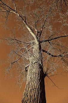 Tree, Trunk, Branch, Bark, Rising Up, Tree Top
