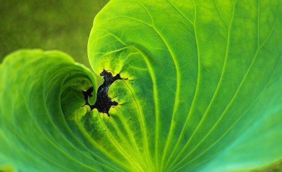Leaf, Flora, Nature, Growth, Desktop, Color, Vibrant