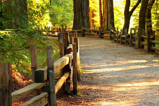 Wood, Fall, Tree, Nature, Footpath, Path, Pathway
