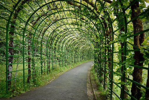 Nature, Wood, Leaf, Instructions, Plant, Passage, Away