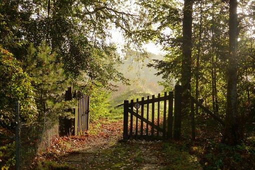 Tree, Nature, Landscape, Leaf, Autumn, Sun