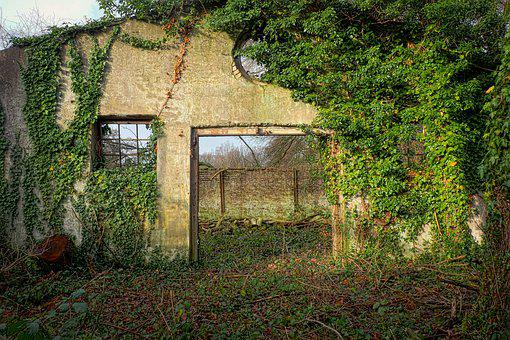 Wood, Nature, Tree, Home, Lost Places, Pforphoto, Barn