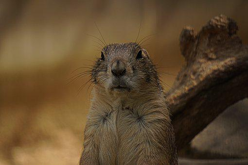 Mammal, Animal World, Nature, Cute, Rodent