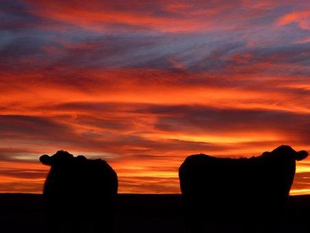 Sunset, Dawn, Dusk, Evening, Sun