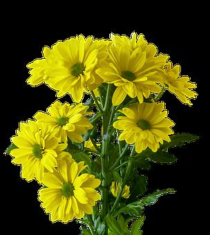 Flower, Plant, Bouquet, Nature, Floral, Marguerite