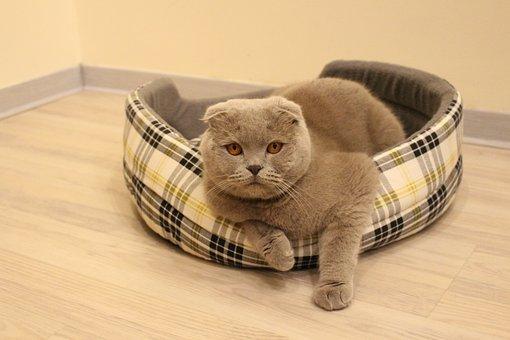 Cat, Animal, Pet, Fluffy Cat, Cat Looking, Grey Cat