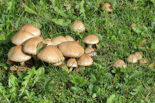 Fungi, Mushroom, Boletus, Nature, Food