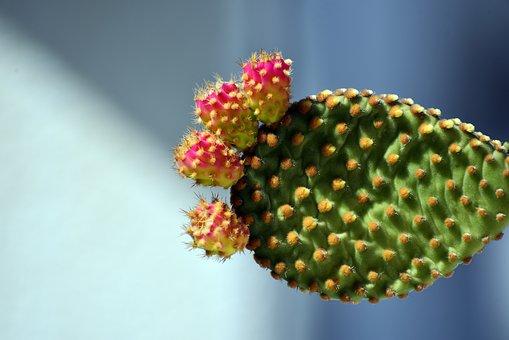 Nature, Flora, Outdoors, Leaf, Closeup, Flower, Fruit