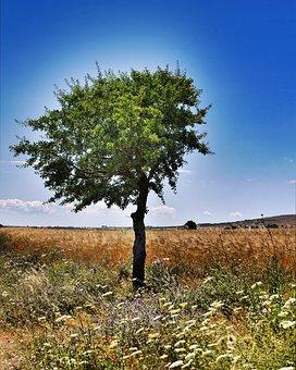 Tree, Nature, Landscape, Blue Sky, Outdoors, Flowers