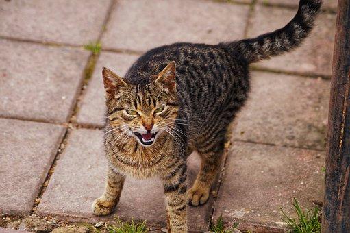 Animals, Cat, Nature, Mammals, Fur Leather