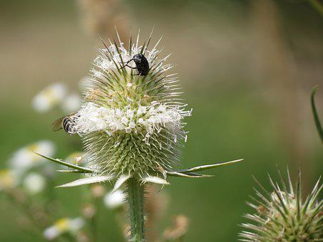Nature, Plant, Flower, Summer, Outdoors, Insect