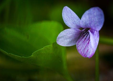 Nature, Flower, Plant, Sheet, No One, Macro