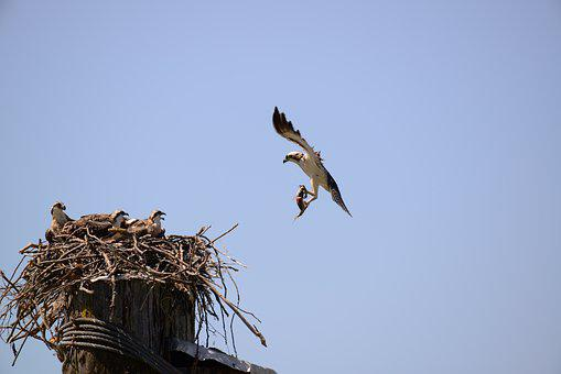 Bird, Sky, Outdoors, Nature, Wildlife, Nest, Flight
