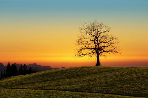 Tree, Sunset, Nature, Dawn, Landscape, Sky, Evening