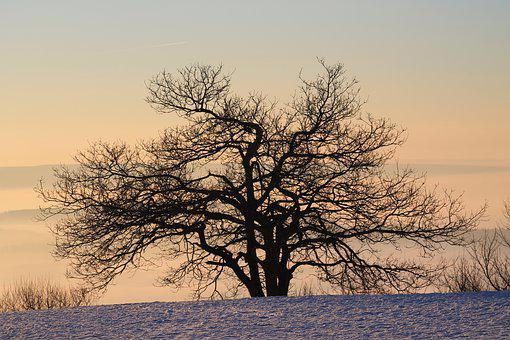 Tree, Landscape, Nature, Dawn, Winter, Snow, Sunrise