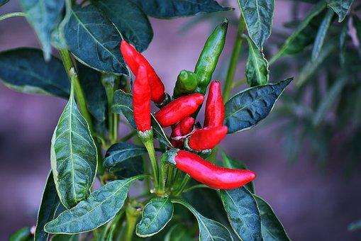 Leaf, Spice, Food, Nature, Flora, Vegetable, Chili