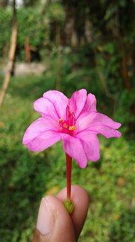 Nature, Flower, Flora, Summer, Garden, Beautiful, Color
