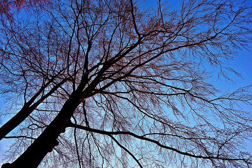 Tree, Tree Top, Winter Tree, Branch, Bare Branch