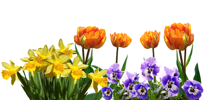 Spring, Tulips, Daffodils, Pansy, Easter, Nature