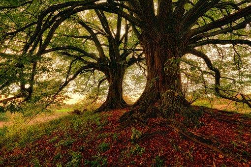 Tree, Nature, Wood, Leaf, Landscape, Autumn, Leaves