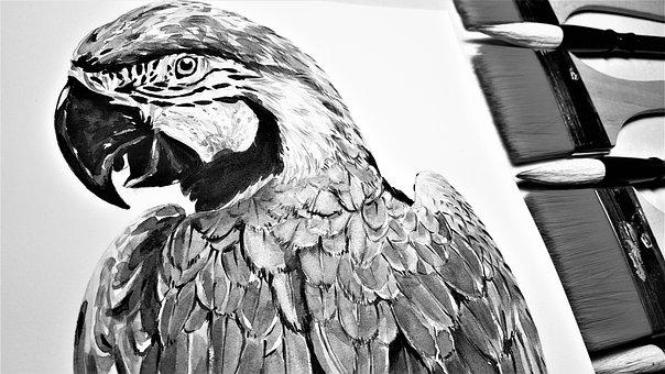 Parrot, Macaws, Brush, Animal, Nature, Bird, Art