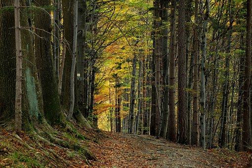 Tree, Landscape, Nature, Leaf, The Stage, Autumn