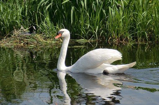 Nature, Body Of Water, Birds, Wildlife, Animal Kingdom