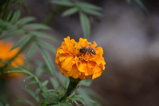 Nature, Flower, Flora, Leaf, Garden, Closeup, Outdoors
