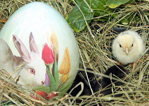 Easter, Egg, Nest, Bird, Chicks