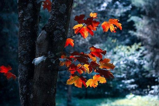 Nature, Fall, Outdoors, Leaf, Wood, Light, Season, Tree