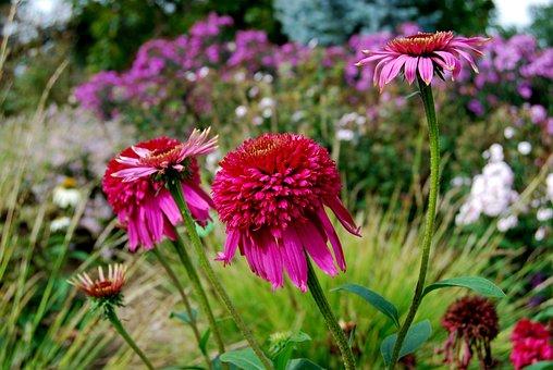 Flower, Nature, Plant, Summer, Garden, Blooming, Floral