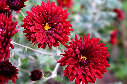 Flower, Nature, Flora, Garden, Blooming, Petal, Floral