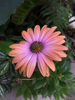 Daisy, Flower, Flowers, Spring, Margaret Wild, Yellow