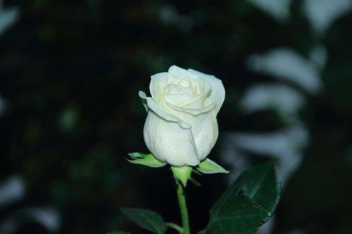 Flower, Flora, Nature, Leaf, Garden, Color, Beautiful